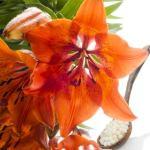 Lilium tigrinum Globuli